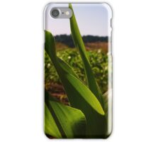 Curvy Corn iPhone Case/Skin