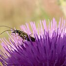 Nature in Miniature  by mikebov