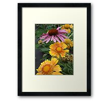 Coneflower and Indian Blankets Framed Print