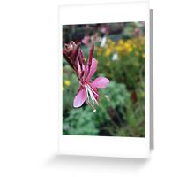 Gaura Greeting Card