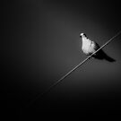 bird on a Wire by sparrowdk