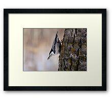Defy Gravity - Elk Island National Park Framed Print
