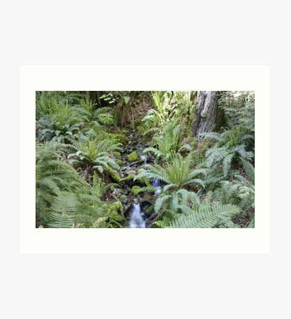 Mountain Stream with Ferns and Sunlight Art Print