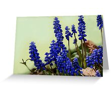 Ode to Copenhagen Blue.........  Grape Hyacinth Greeting Card