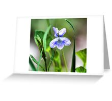 --Sweet Blue Violet in Tall Meadow Grass Greeting Card