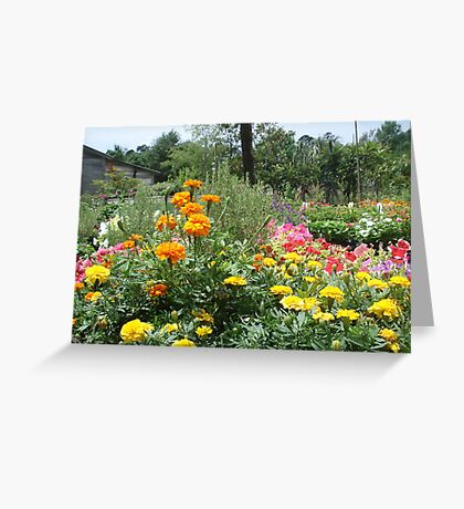 Spring at the Springfield Nursery Greeting Card