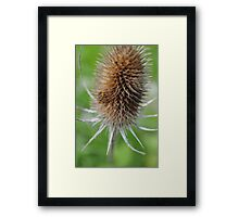 Pain is only valuable once you know that you've learned from it. Framed Print