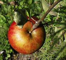 The One and Only Apple on the Tree by Rebecca Bryson