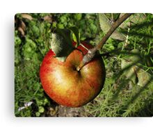 The One and Only Apple on the Tree Canvas Print