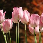 Tulips In The Garden by Daniel B McNeill