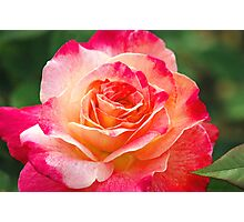 Rose Is Her Name Photographic Print