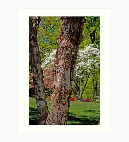 Spring Time At Brookside Gardens Art Print