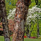 Spring Time At Brookside Gardens by Daniel B McNeill