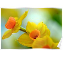 Tiny Yellow Daffodils Poster