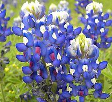 Texas State Flower Bluebonnet by BrigitteinTexas
