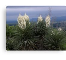 Yucca Tree in Burnet Texas Canvas Print