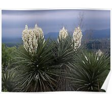 Yucca Tree in Burnet Texas Poster