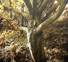 Forest Dweller by Anne  McGinn
