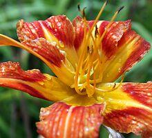 Water drops on flowers petals by orion plexus