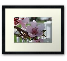 The Beauty of Spring ~ Close Up View Framed Print