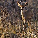Warrior Deer by JamesA1