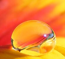 Beauty in a Drop by Stacy Colean