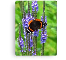 The Admiral on Blue Vervain Canvas Print