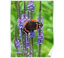 The Admiral on Blue Vervain Poster
