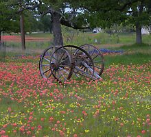 Wagon wheel nestled in Indian Paint Brushes in Texas  by BrigitteinTexas