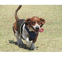 Shango having fun at a dog park Photographic Print