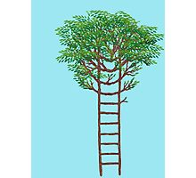 Ladder Tree Photographic Print