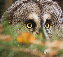I see you by Dominika Aniola