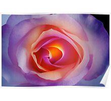 Colorful Rose Petal Serenity Poster
