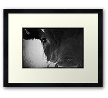 Cows Eye View Framed Print