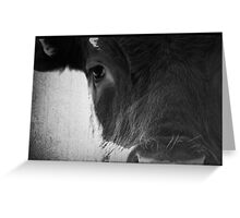 Cows Eye View Greeting Card