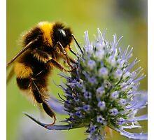 The Bee's Knees Photographic Print