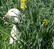 spring goose by uncleblack