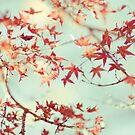 autumn by etoile