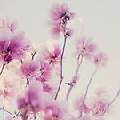 magnolia by etoile