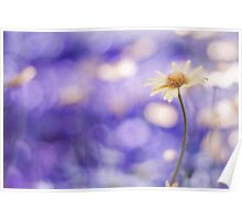 more bokeh than you can shake a flower at Poster