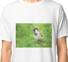 Male House Sparrow Classic T-Shirt