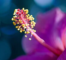 Hibiscus Stamen Standing Out by jayneeldred