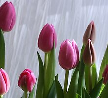 tiptoe through the tulips by JulesVandermaat