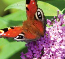 Peacock Butterfly on Buddleia Sticker