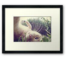 _ playful _ Framed Print