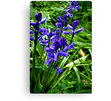 Bluebells #1 Canvas Print