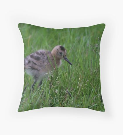 Black-tailed Godwit Chick Throw Pillow