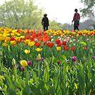 Tulip (2) by nicolaMY