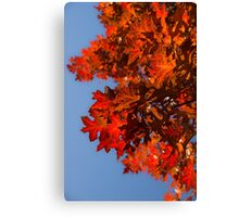 Radiant Reds - Oak Leaves and Brilliant Blue Sky Canvas Print