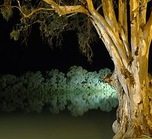 Willows in the spotlight - Murray River, Renmark by Paul Campbell  Photography